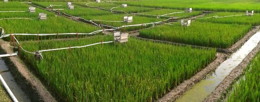 Developing an economic, environmental and agronomic case for the increased use of organic amendments in SouthAsia