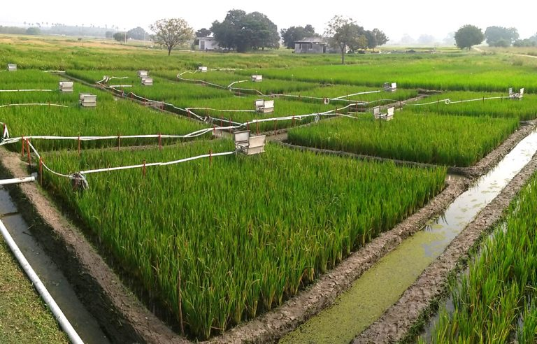 Automated chambers in the Rice plots at ICRISAT, India, December 2016.