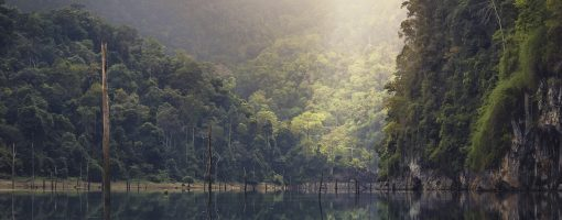 Models for payment mechanisms for forest ecosystem services in Papua New Guinea, Philippines and Thailand