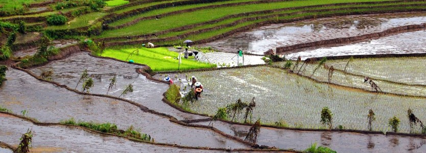 UNESCO World Heritage Site - Nagacadan Rice Terraces (Kiangan, Ifugao) (PHOTO: FLICKR/SHUBERT LAZARO CIENCIA (CC))