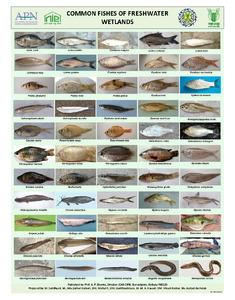 Poster 2-fish.pdf